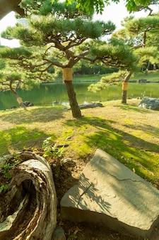 東京の有名な歴史的な浜離宮恩賜庭園の池の横にある風光明媚な日本の松