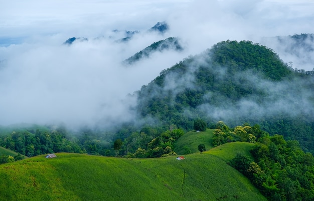 Scenic landscape of agriculture field with fog on the hill in thailand