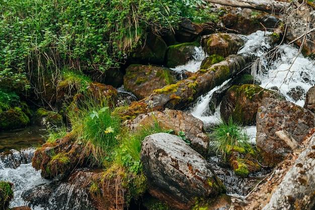 山腹の森の中の小さな川の野生の美しい植物相への風光明媚な風景