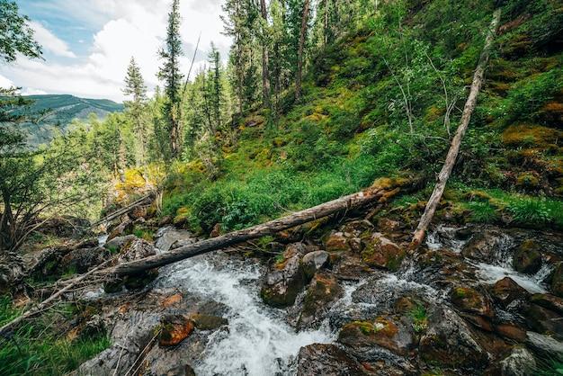 Живописный пейзаж дикой красивой флоры на речке в лесу на склоне горы.