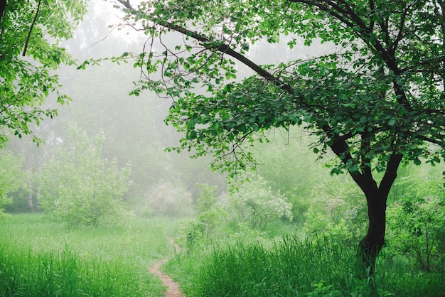 Scenic landscape with beautiful lush green trees and fog.