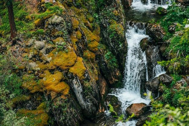 豊かな植生に囲まれた森の中の美しい滝のある風光明媚な風景。山腹から澄んだ湧き水が流れています。マウンテンクリークのある雰囲気のある木々の風景。岩の上の野生植物やコケ。