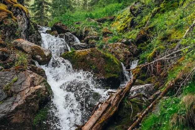 豊かな植生に囲まれた森の中の美しい滝のある風光明媚な風景。水しぶきの凍った動き。澄んだ湧き水。マウンテンクリークのある雰囲気のある木々の風景。岩の上の野生植物とコケ