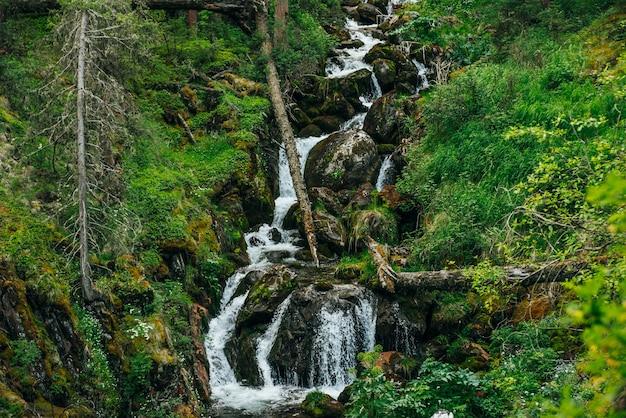 Живописный пейзаж с красивым водопадом в лесу среди богатой растительности.