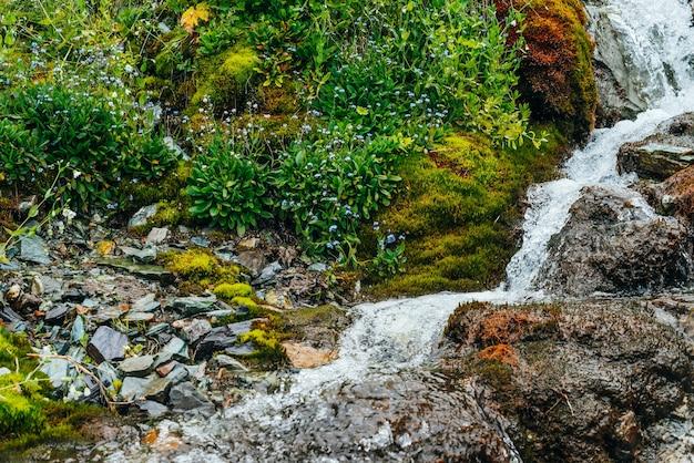 厚い苔と緑豊かな植生の間に澄んだ春の水流がある風光明媚な風景。新鮮な緑とたくさんの小さな花が咲く苔むした斜面のマウンテンクリーク。高山植物が豊富なカラフルな風景。