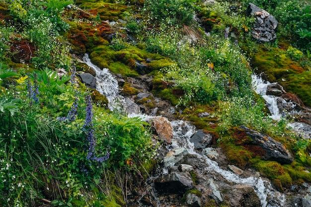 두꺼운 이끼와 무성한 초목 사이에 맑은 샘물이 흐르는 아름다운 풍경