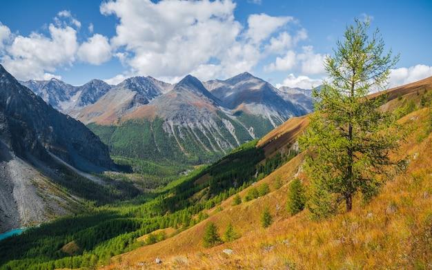 黄色い秋の丘の中腹に針葉樹のある風光明媚な山の風景。山の急な斜面にカラマツと緑の木々のある美しい秋の風景。