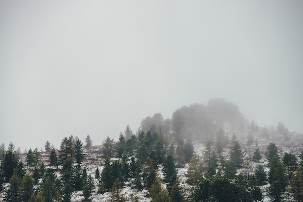Scenic mountain landscape with sharp rocks on snowy hill with coniferous trees. rocky pointy peak with trees on mountain top with forest in snow. green spruces and yellow larches in autumn in snowfall