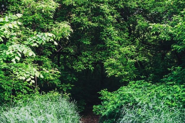 무성한 덤불의 경치 좋은 자연 녹색 배경