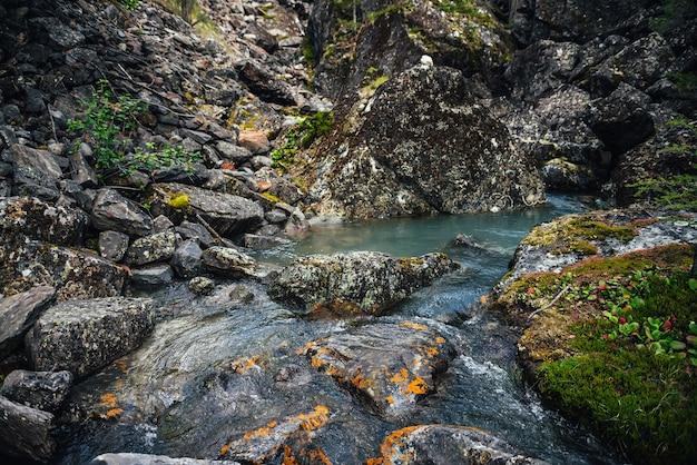 コケ、地衣類、野生植物が生息する岩の間のターコイズブルーの澄んだ水の流れの風光明媚な自然の背景。透明なマウンテンクリークのある雰囲気のある山の風景。美しい渓流。
