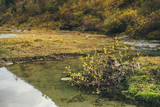 金の秋の色の野生の山の植物と風光明媚な自然の背景。日光の下で水流の上に黄色の葉。山の黄金の秋の植物。黄色の葉のクローズアップと自然の背景。