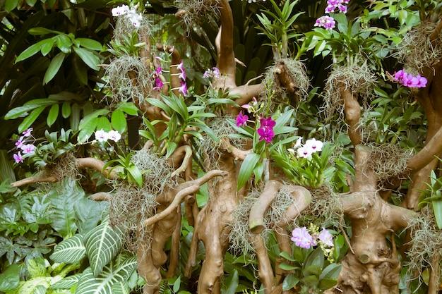 シンガポール植物園の枯れ木の根にある風光明媚なランのプランテーション