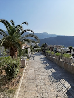 Scenic panoramic view in montenegro. sea, palm trees, beach. southern europe.