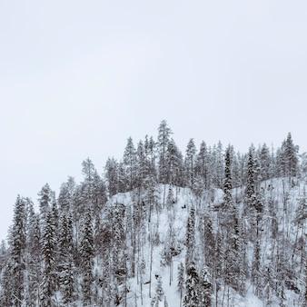 フィンランド、オウランカ国立公園の雪に覆われた風光明媚な松林
