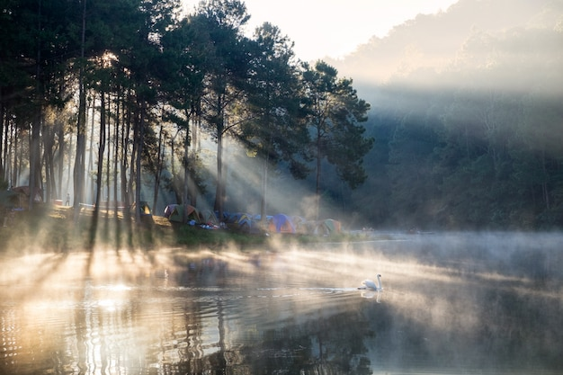 Scenic pine forest sunlight shine on fog reservoir in morning at pang oung