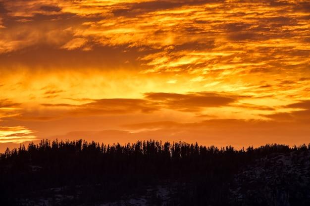 일몰시 숲 위의 주황색 하늘의 경치 샷