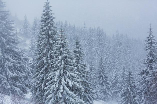 冬の風光明媚な雪に覆われた森。クリスマスの背景に適しています。