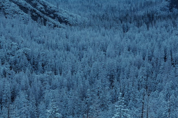 冬の風光明媚な雪に覆われた森。 Premium写真