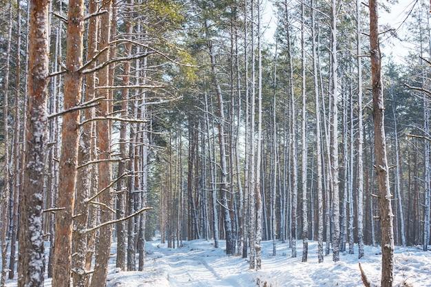 Живописный заснеженный лес в зимний сезон.