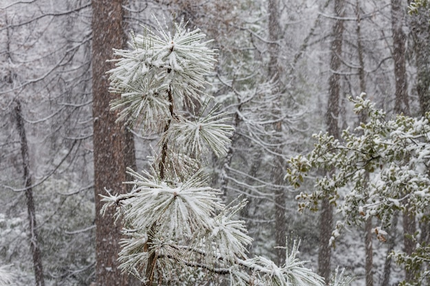 Scenic snow-covered forest in winter season. good for christmas background.