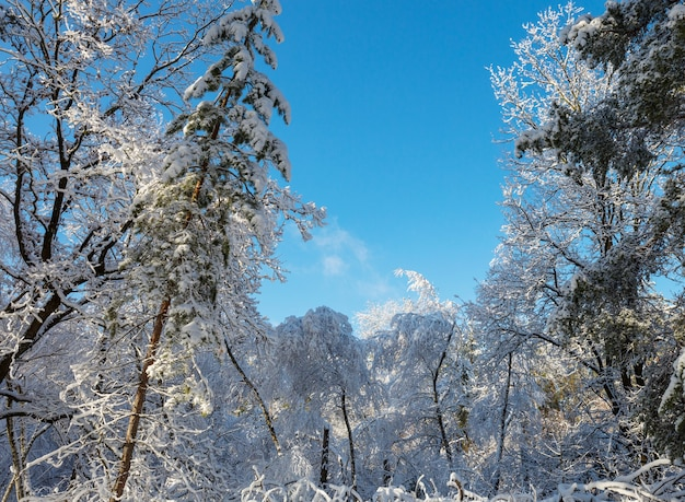 Scenic snow-covered forest in winter season.