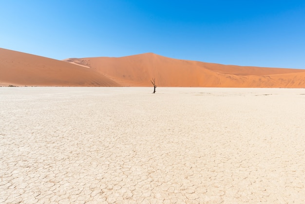 The scenic sossusvlei and deadvlei, clay and salt flat surrounded by majestic sand dunes