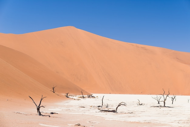 The scenic sossusvlei and deadvlei, clay and salt pan with braided acacia trees surrounded by majestic sand dunes.