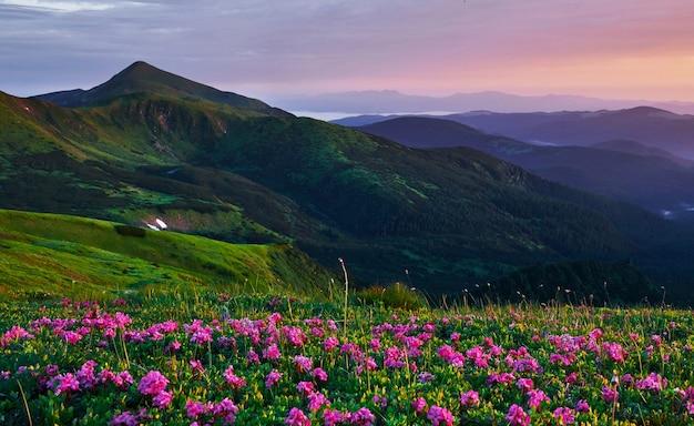 Живописное пространство. величественные карпаты. красивый пейзаж. захватывающий вид.