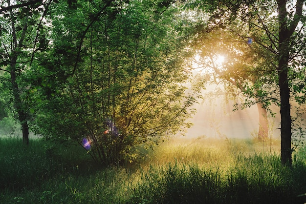 Scenic sunny green landscape. scenery of morning nature in sunlight. trees silhouettes on sunrise. sunbeams and lens flare on foliage with copy space. bright sun shines through trees leaves on sunset.