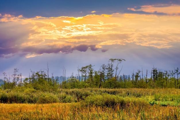 草や木々と牧草地に沈む夕日