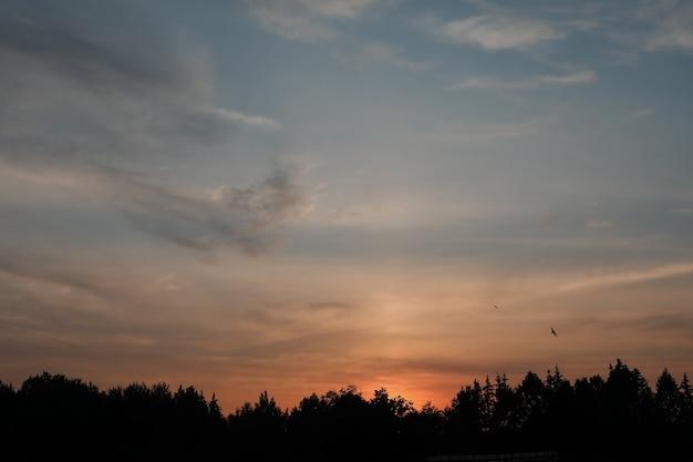 Живописное закатное небо с силуэтами летающих птиц