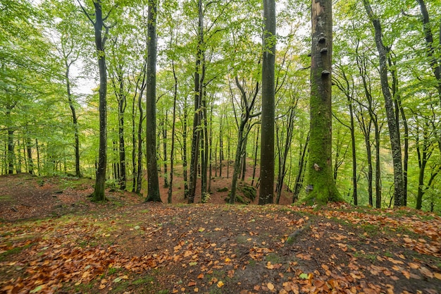 Scenic view of a beech wood in spring