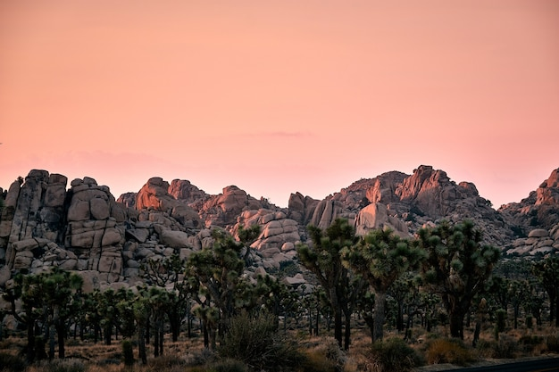 Scenic view of the joshua tree national park during sunset