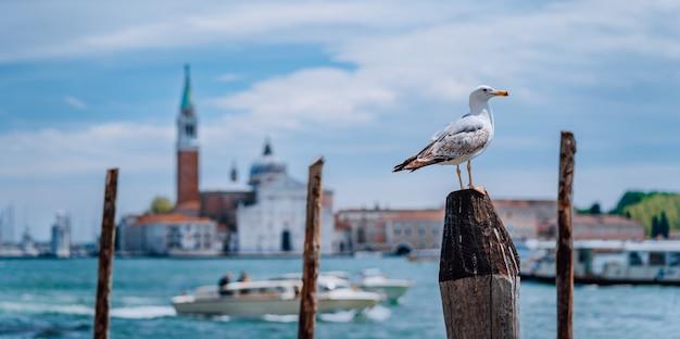 カモメが正面にあるヴェネツィアの堤防のぼやけたヴェネツィアのパノラマの美しい景色。最も人気のある