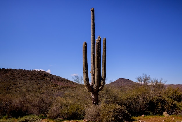 Scenic view of phoenix arizona desert in south mountain