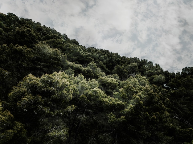 Scenic view of trees against cloudy sky