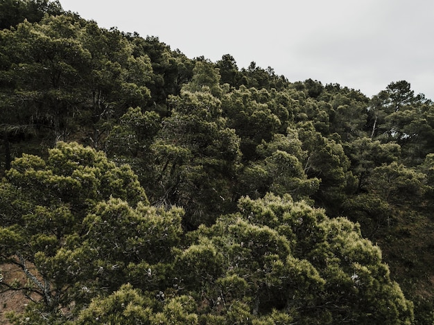 Scenic view of trees growing in forest