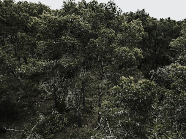 Scenic view of tropical trees in forest