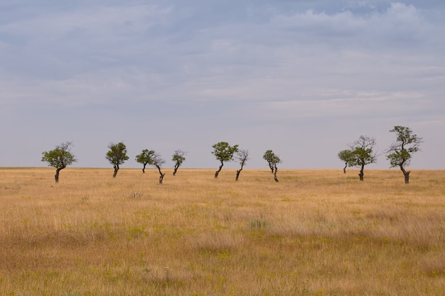 Scenic view of vast arid field with dry grass and several green trees in background on cloudy spring day. outdoor shot of spacious yellow meadow with few lonely solitary trees with thick foliage
