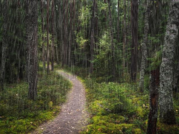 雨の日の風光明媚な鮮やかな緑の森の風景。深い森の木々の下の小道。緑の草と葉の間の小道のあるカラフルな風景。鮮やかな自然緑の背景。