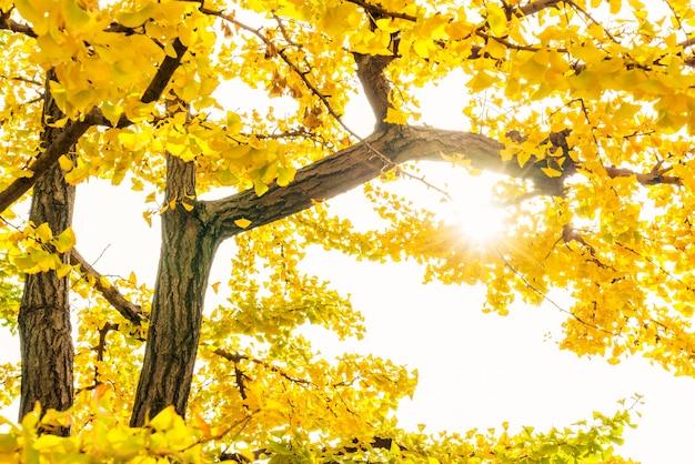 風景自然太陽美しい季節