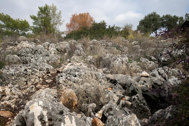 Живописный вид на пейзаж, веред ха-галиль, галилея, израиль