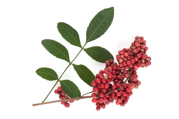 Schinus terebinthifoliaの果実と緑の葉は、白い背景で隔離。上面図、フラットレイ。