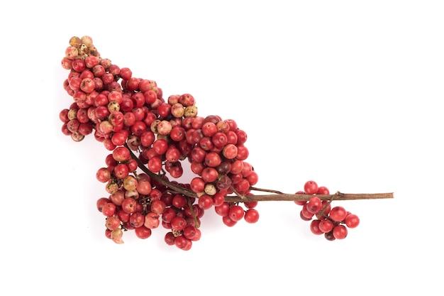 白の背景に分離されたschinusterebinthifoliaの果実。上面図、フラットレイ。