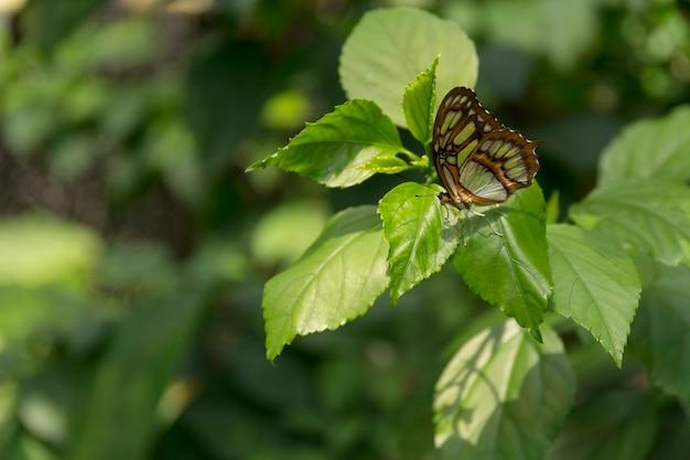 美しい蝶、緑の自然の背景に昆虫、schmetterlinghausで撮影、
