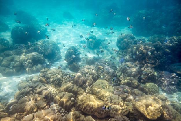 海のサンゴ礁の岩の上を泳ぐ学校の魚