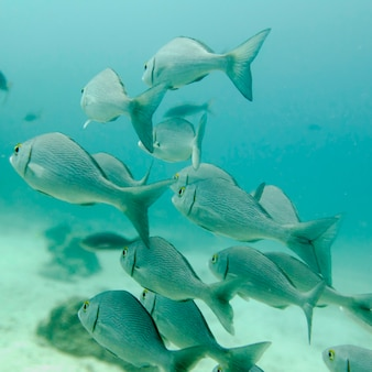 School of fish swimming underwater, santa cruz island, galapagos islands, ecuador