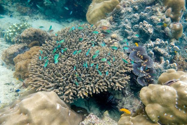 サンゴ礁で泳ぐ魚の群れ