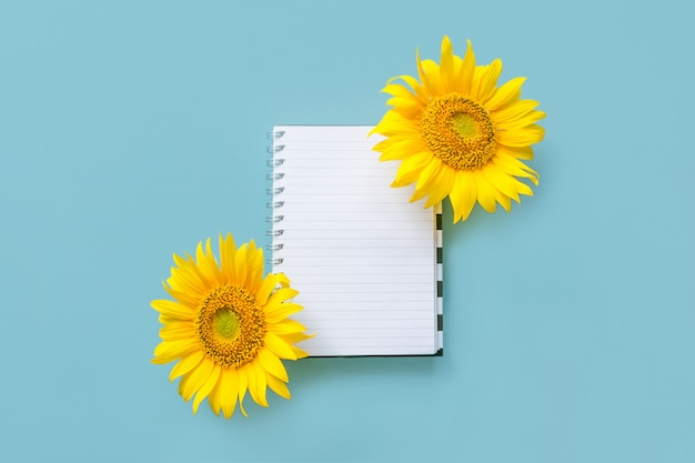 School open white notebook and sunflower on blue background