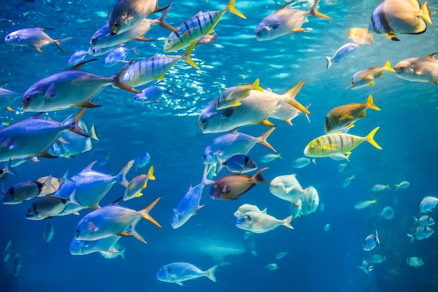 School of sea  fish are swimming to water surface